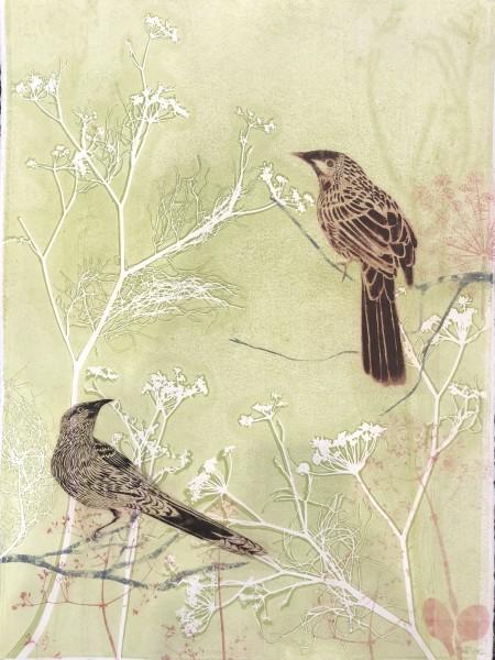 A morning walk in my garden, wattlebirds (framed)