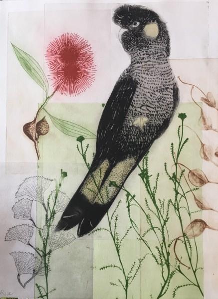 Black Cockatoo & Hakea III