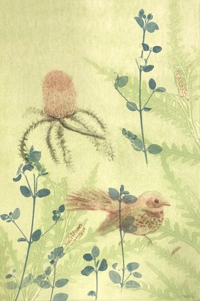 Wren, banksia flower and grevillea