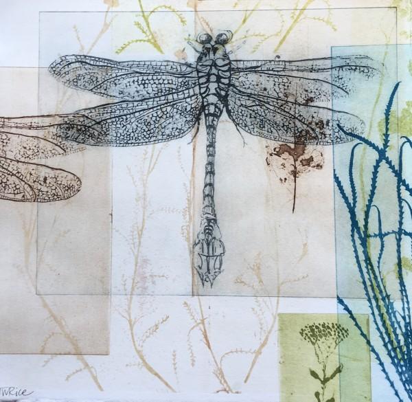 Dragonflies and skeleton leaf