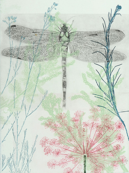 Dragonfly and pink euphorbia