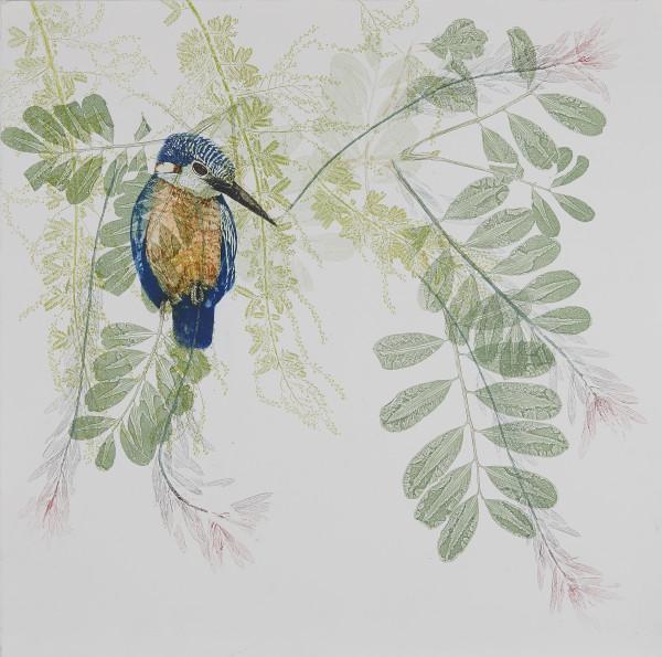 Kingfisher in my garden