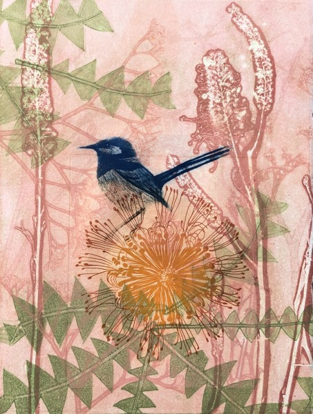 Little Blue Wren and Banksia Flower