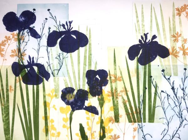 Six Deep Purple Iris in the garden at Lorne