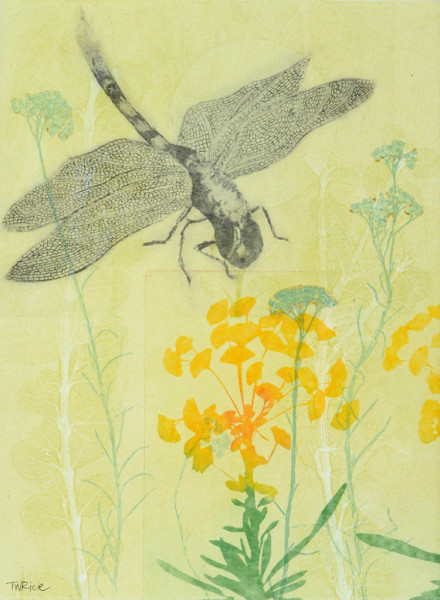 A dragonfly's nectar