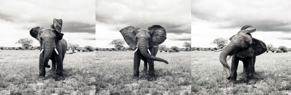 For the Elephants III