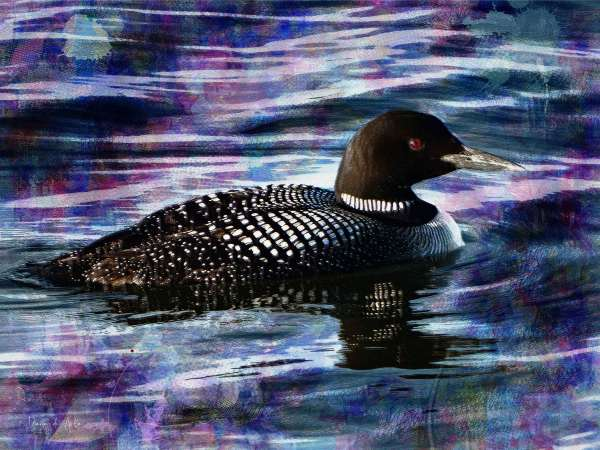 Loon on Purple Waters