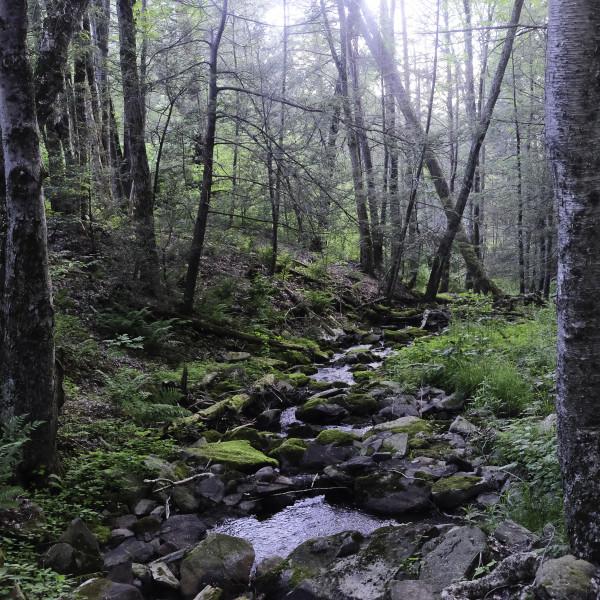 Summer Solstice, Catskills