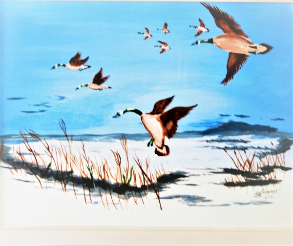 """""""Canadian Geese Flying Home"""""""
