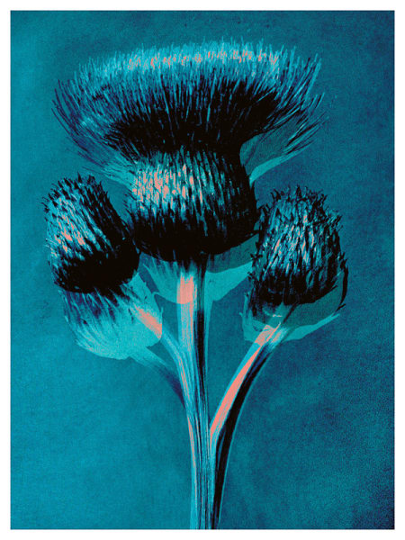 Plantstudie 5  50x37cm framed print 1 of 5