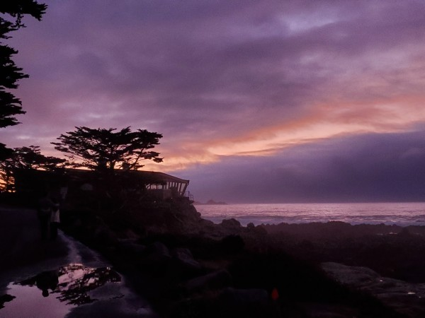 Carmel Purple Haze