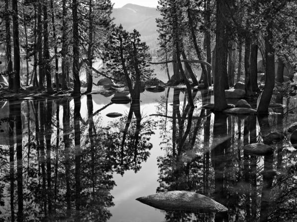 Shoreline Reflections, Trees and Rocks