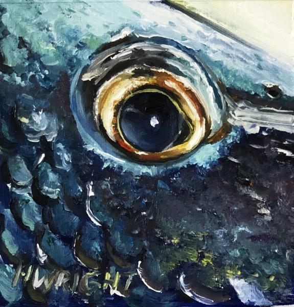 Sea Bass Eye