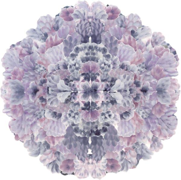 Hydrangea Mandala