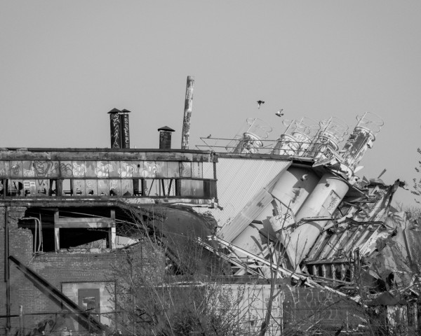 Pigeons Flying Over a Demolition in Baltimore City