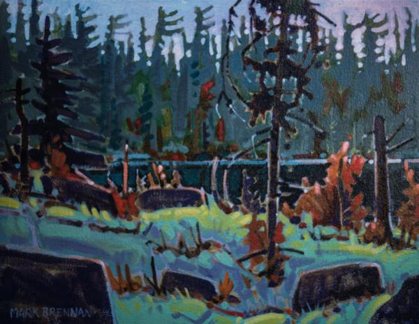 Pines On The Liscomb, Nova Scotia