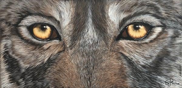 Rockwood Wolf