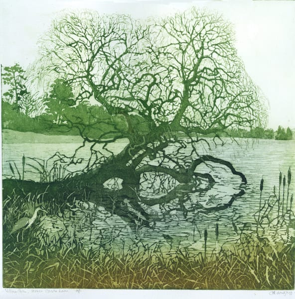 LON181, Willow on Lake at Hever Castle