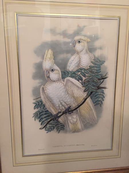 hand painted framed cockatoo