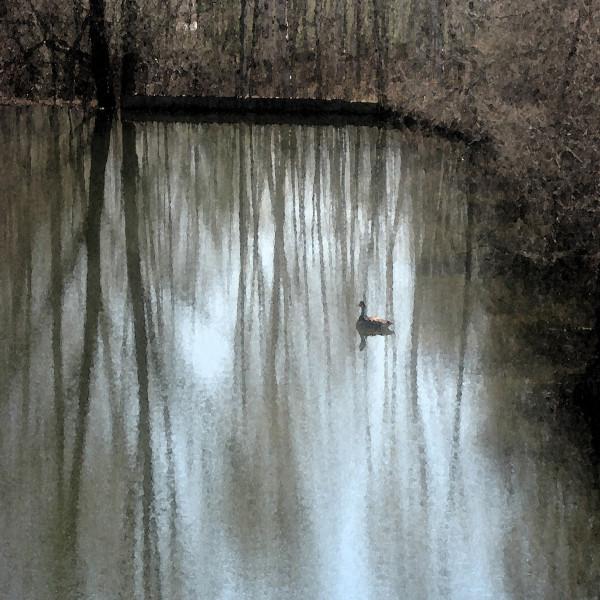 A Single Duck
