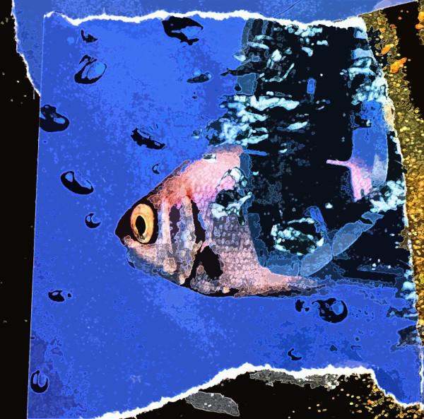 Fishy Fishy Four (1/10)