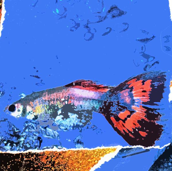 Fishy Fishy One (1/10)