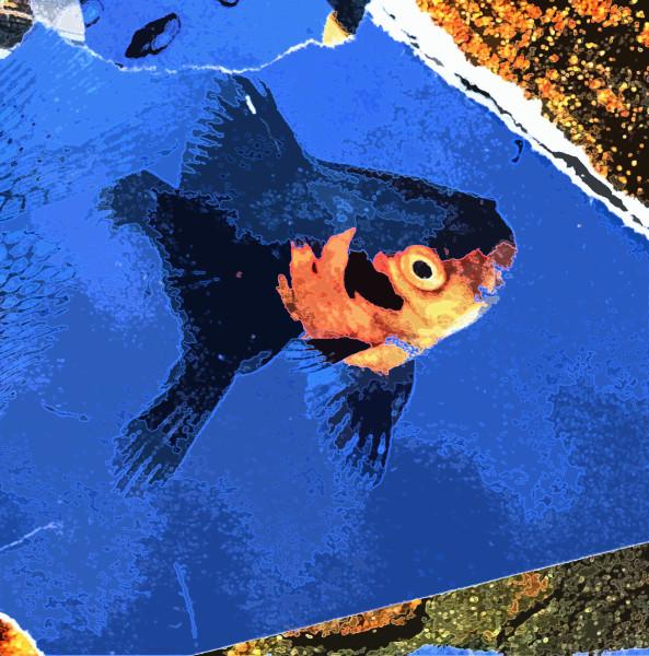 Fishy Fishy Three (1/10)