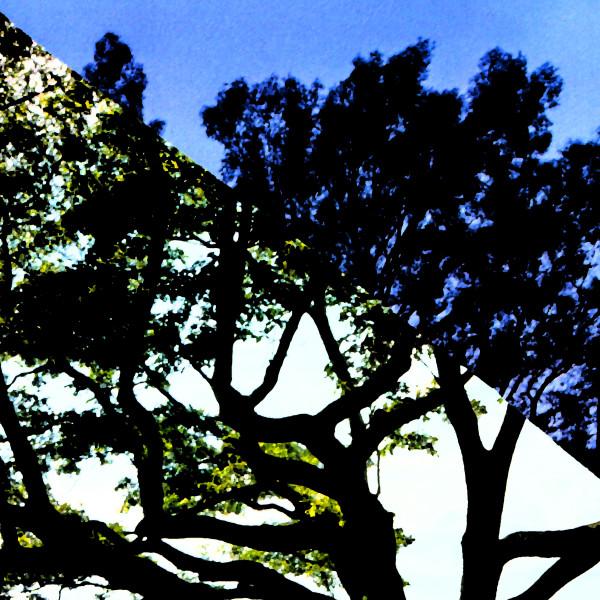 Split Treescape