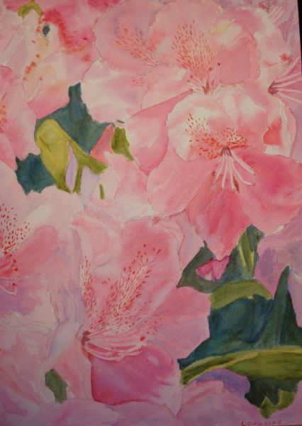 Rhodendrons 2