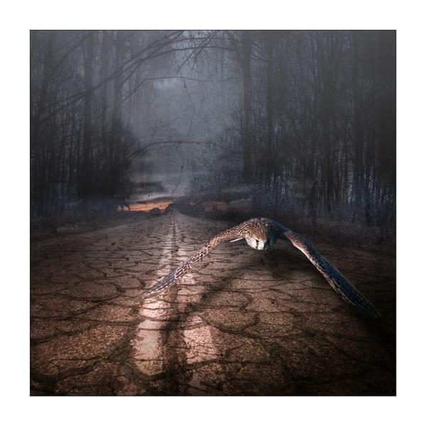 The Road not Taken   #1/30