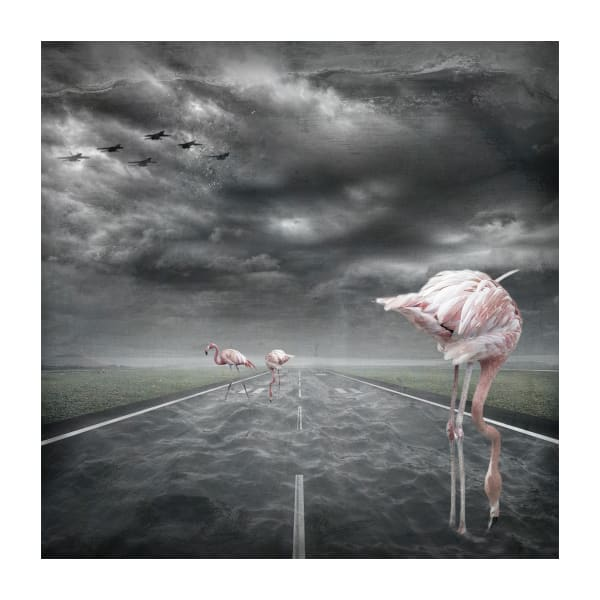 The Pink Runway   #2/30