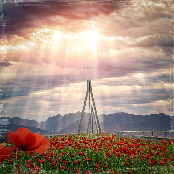 The Bridge of Poppies   #1/5