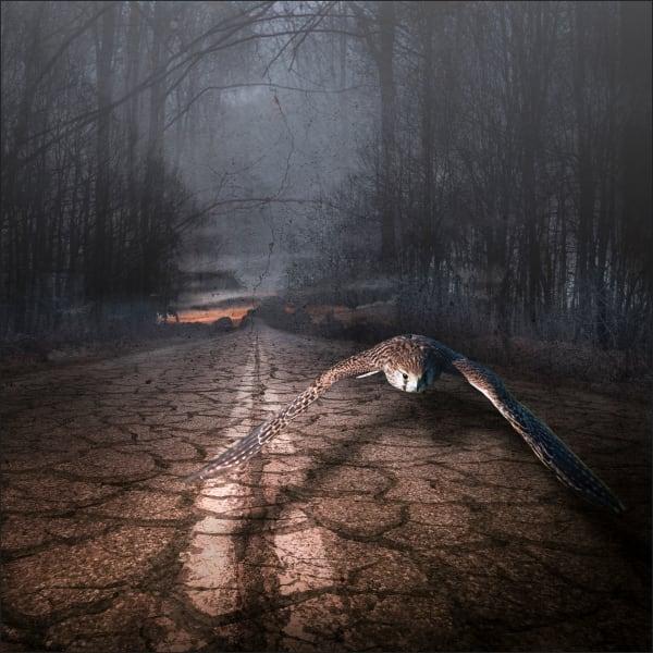 The Road not Taken   #1/5