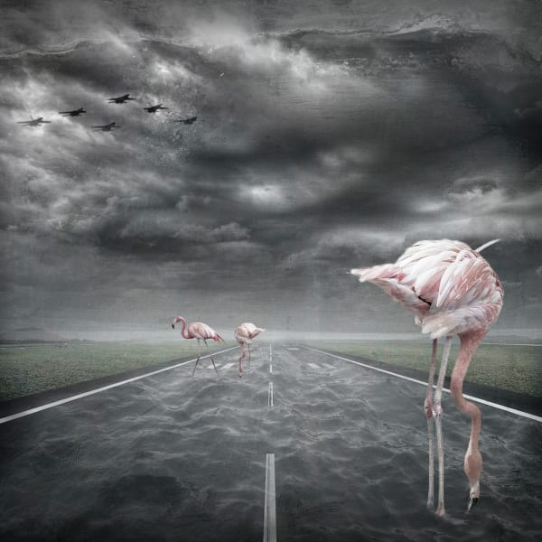 Pink Runway Big   #2/5