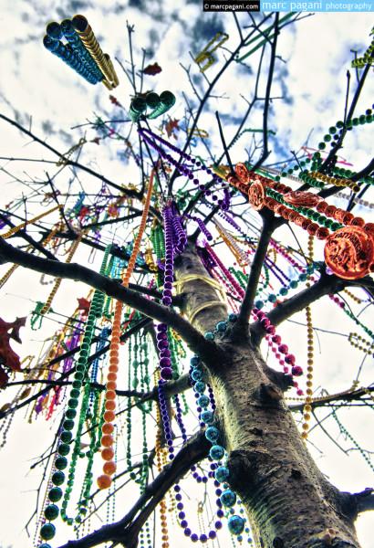 St. Charles Avenue - Mardi Gras Day