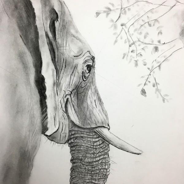 Study of Elephant