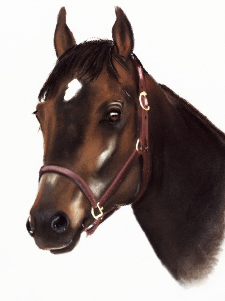 Portrait of a Horse (study)