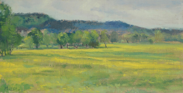 Yellow Fields outside the Ozark National Forest