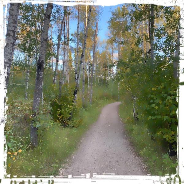 Edmonton River Valley - climb through the birch