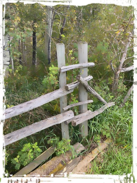 Fence on the farm