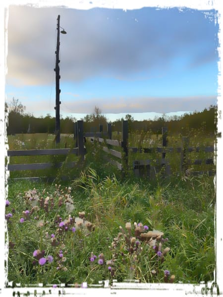 The beauty of an old fence