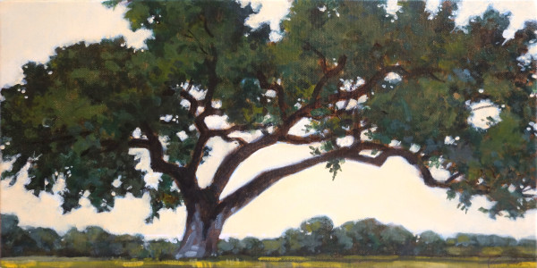 Heritage Oak Along The Road To Austin