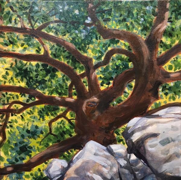 Taniguchi Tree & Rocks