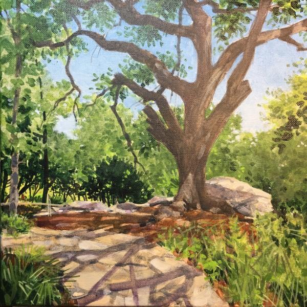 Hilltop Tree - Zilker Botanical Garden