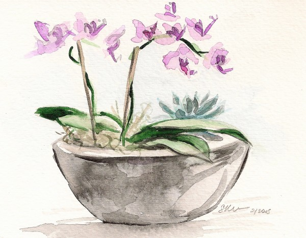 Orchid Boat with Succulent