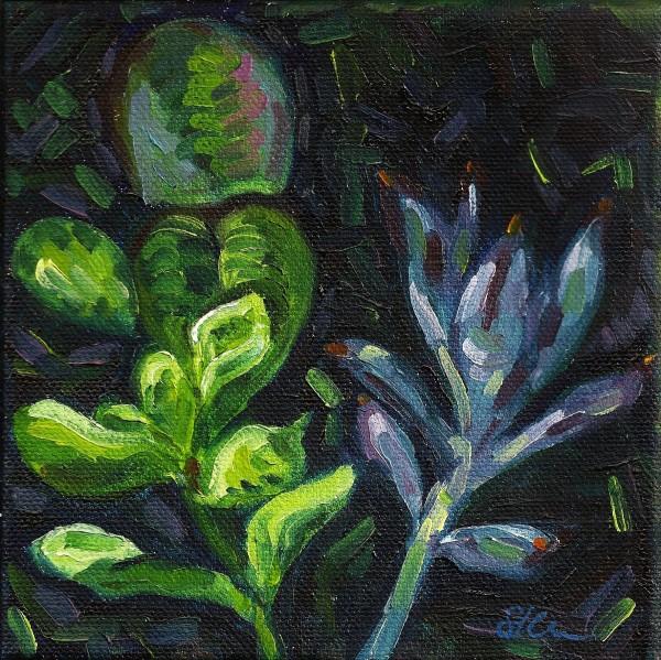 Small Succulent Bouquet