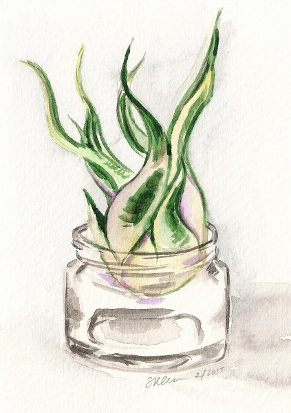 Air Plant in Jar
