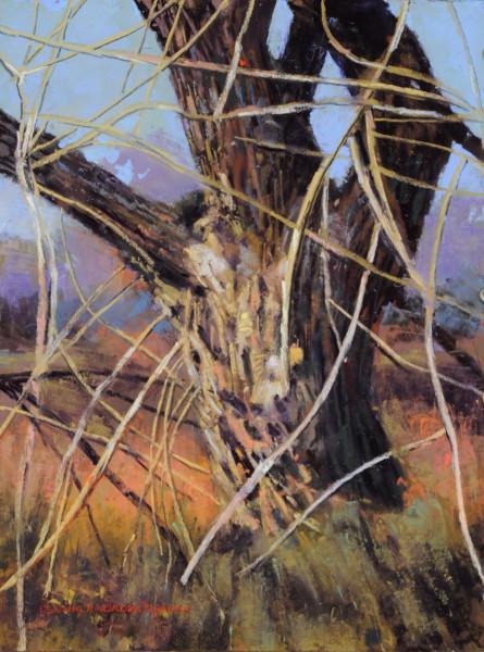 Tangled Cottonwood