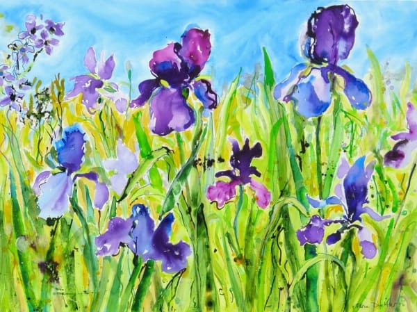 In June the Iris Bloom