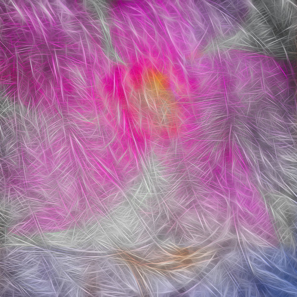 Feathers and Oleandar